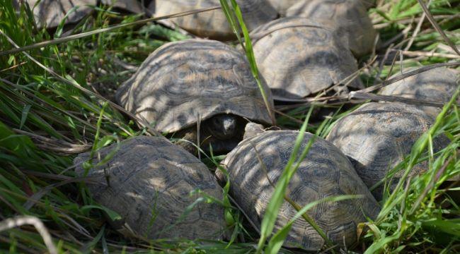17 kaplumbağa ölmek üzereyken kurtarıldı