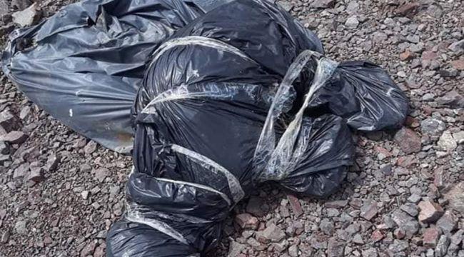 Ankara'da bir başka köpek katliamı daha