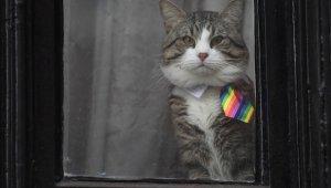 """Assange'ın avukatı açıkladı: """"Kedi James kurtarıldı ve iyi"""""""