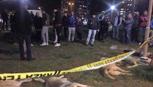Başkent'te zehirli etlerle köpek katliamı