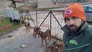Bir köpek katliam haberi de Kütahya'da