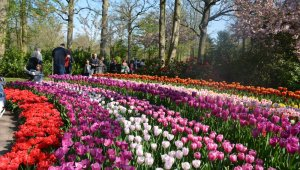 Dünyanın en büyük lale bahçesine yoğun ilgi