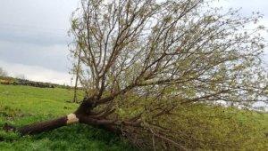 Hortum ağaçları elektrik direklerini devirdi