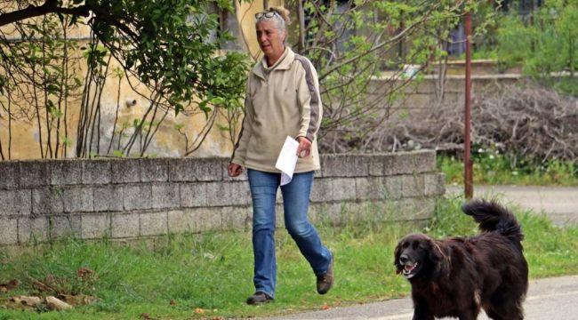 Kaybolan köpeğini diğer köpeklerle birlikte arıyor