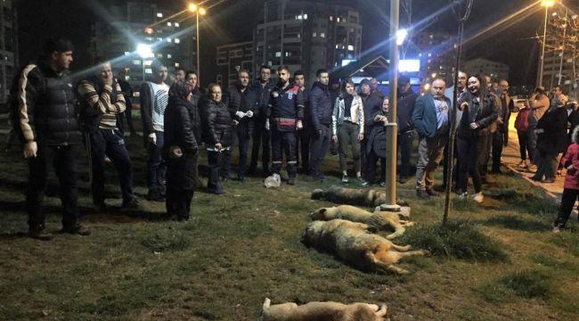 Köpek katliamı ile ilgili 1 gözaltı