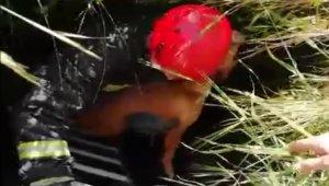 Kuyuya düşen köpeğin yardımına itfaiye ekipleri koştu