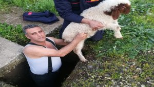 Kuyuya düşen kuzuyu itfaiye kurtardı