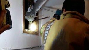 Mahsur kalan martıyı itfaiye ekipleri kurtardı