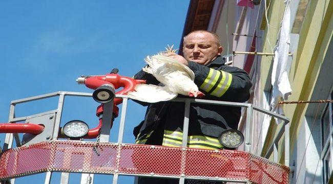 Rize itfaiyesinden tavuk kurtarma operasyonu