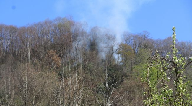 Rize'de ormanlık alanda yangın