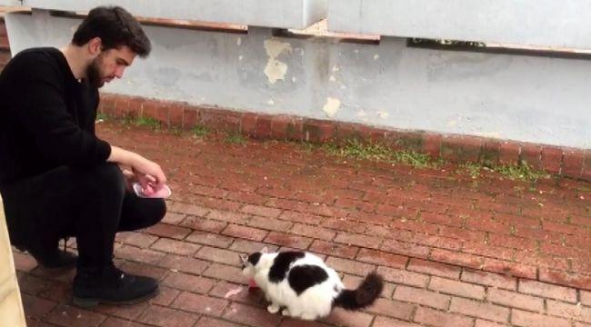 Şadırvanından su içen kedi ilgi odağı oldu