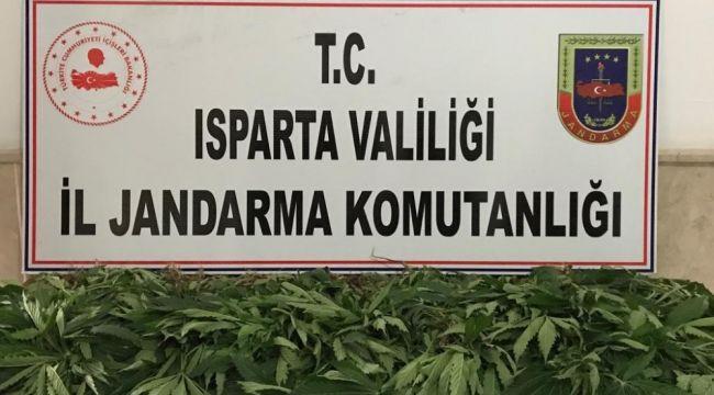 Jandarma'dan kenevir operasyonu: 1 gözaltı