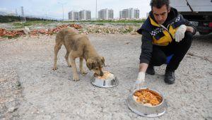 Buca'da can dostlarına su ve gıda desteği