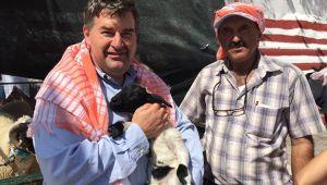 5.Ovacık Tarım ve Sakız Koyunu Festivali başlıyor