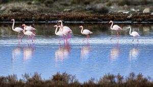 Çeşme Belediyesi ve WWF-Türkiye işbirliğiyle Alaçatı doğa turizminde de iddialı