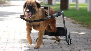 Engelli hayvanları hayata bağlayan Vestel'e İngiltere'den ödül geldi