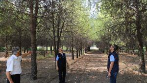 EÜ Ormanı Bilimsel Yöntemlerle Rehabilite Ediliyor