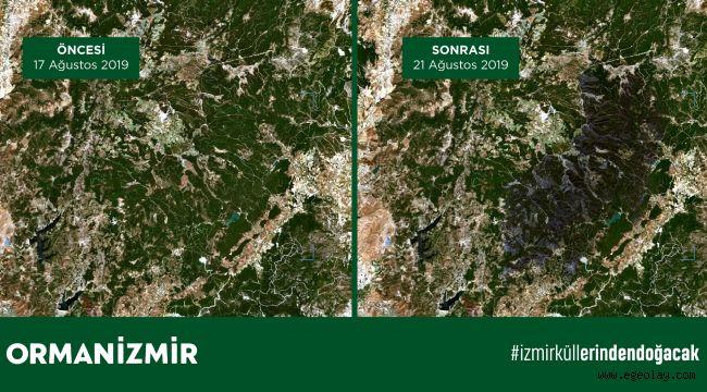 İzmir'deki yangında Karşıyaka ilçesi büyüklüğünde bir orman alanının yandığı tahmin ediliyor