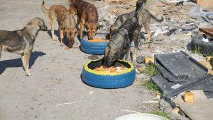 Buca'da sokak hayvanları unutulmuyor
