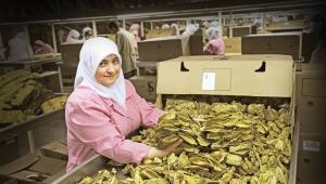 """Ege Tütün İhracatçıları Birliği Başkanı Ömer Umur:""""Yasa dışı tütün ticaretine uygulanacak ceza ihracatımızı pozitif etkileyecek"""""""