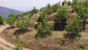 Köyler Gelir Getirici Ağaç Modeliyle Kalkınıyor