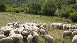Türkiye'de İlk Defa Güvenli Gıda Takip Sistemi