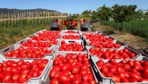 Irak taze domates ithalatı yasağını kaldırdı