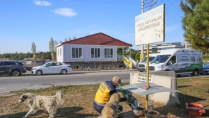 Buca Belediyesi kentte ve kırsalda mama desteğini artırdı