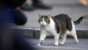 Kediler koronavirüsü iki günde yeniyor