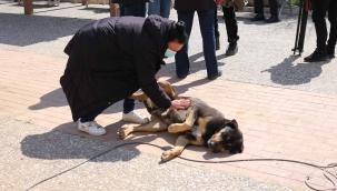 Karşıyaka Belediyesi'nden bir ilk: Sokak köpekleri rehabilite edilecek