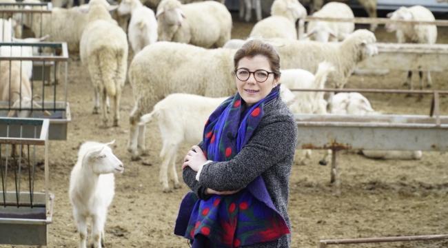 Çobanlar bu platformda buluşuyor