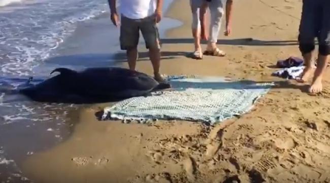İzmir'de karaya vuran yunus öldü